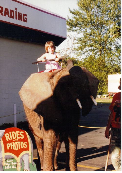 Summit Trading elephant ride 2